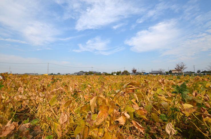 田んぼも秋らしく