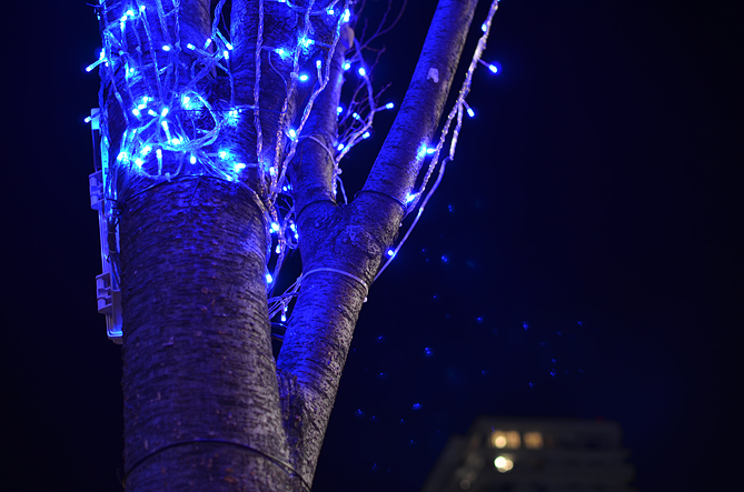 JR蒲郡駅 南口の樹木アップ